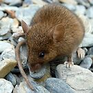 I Don't Want To Be Trout Food!!! - Mouse - NZ by AndreaEL