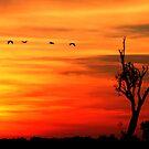 Kakadu Dreaming by Sue  Fellows