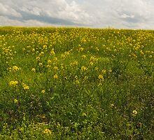Spring Time - Dayton, MD by Matthew Kocin