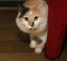 BUFFY THE BEAUTIFUL CAT by Daniel  Oyvetsky