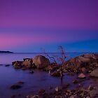 Rose Bay Calm by Lincoln Stevens