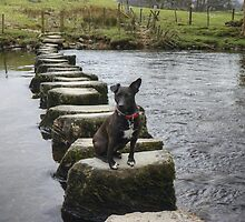 A Walk By Mere,Tarn and Water - The Terrier by VoluntaryRanger