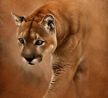 Prowling Cougar by Norman Rawn