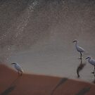 White Herons at the Beach - Garzas Blancas en la Playa by PtoVallartaMex