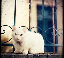 White Cat on Parapet by Marc Loret