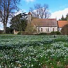 Snowdrops at All Saints, Hinton Ampner by hootonles