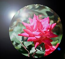 Glass Ball Rose by JELProductions