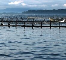 Salmon Farming - Macquarie Harbour, Tasmania by Graham Coward