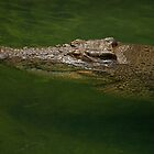 Australian Crocodile by Sea-Change