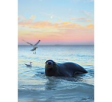 Sammy the Seal Photographic Print