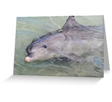 Happy Dolphin Greeting Card
