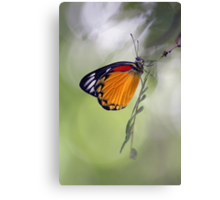 The Butterfly Effect. Canvas Print