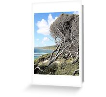 Windswept tree, Yallingup Greeting Card