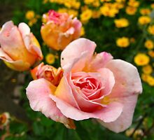 Pink and Buttercup Roses by MarianBendeth
