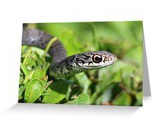 Florida garter snake Greeting Card
