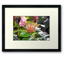Butterfly Snack Framed Print