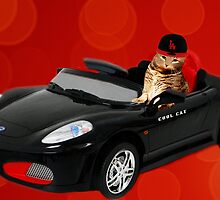 ☁ ☂  COOL CAT IN HIS COOL CAR ☁ ☂   by ╰⊰✿ℒᵒᶹᵉ Bonita✿⊱╮ Lalonde✿⊱╮