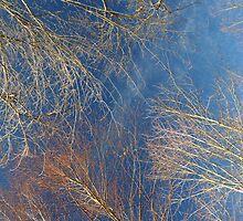 Looking Up... by LindaR