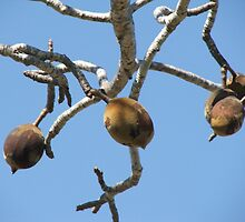 The Boad Seed Pods by ScenerybyDesign