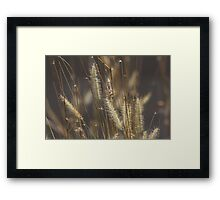 The Answer is Blowing in the Wind. Framed Print