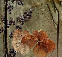 fleurs d'hier by Astrid Ewing Photography