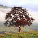 Red Tree by Asoka