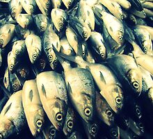School of fish ? by mariatheresa