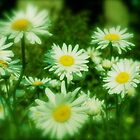 Pushing Up Daisies by phrozenfotos