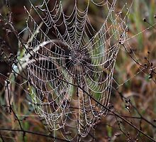 Spider Web with Water Doplets on a Foggy Morning by Carole-Anne