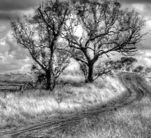 Monochrome Dreams - Cootamundra, NSW - The HDR Experience by Philip Johnson