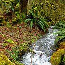 The Surround Sound of Abundant Water by Elaine Bawden
