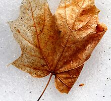 Orange Maple Leaf by Debbie Pinard