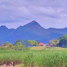 Farm house across the cane fields  by Virginia McGowan