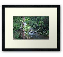 currumbin valley ... Framed Print