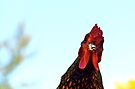 Rooster On A Rampage by Ainsley Kellar Creations