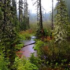 High Cascades Bog by Charles &amp; Patricia   Harkins ~ Picture Oregon