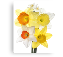 Daffs Canvas Print