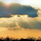 Sunshine On My Shoulders by Melissa Carlini