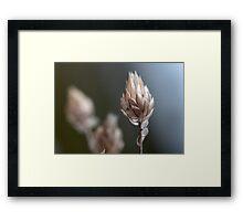 nostalgie: cigale végétale Framed Print