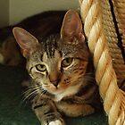 Cutie Cat by Madsen1981