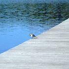 Bird On Bridge by Madsen1981