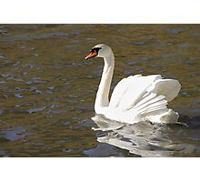 Peace and Gentleness Photographic Print