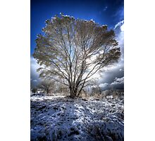 The Cool Side of Trees Photographic Print