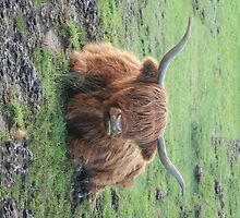 Highland Cow iphone cover by malipix
