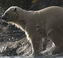 Polar bear by Lenie1946