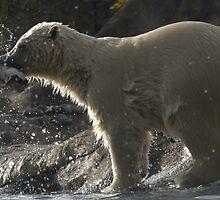 Polar bear by Lenie1946