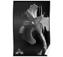 Texture in Dark Poster