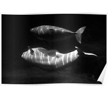 Beluga and baby Poster
