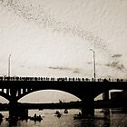 Austin Bats by melanie1313