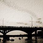 Austin Bats by melanie1313